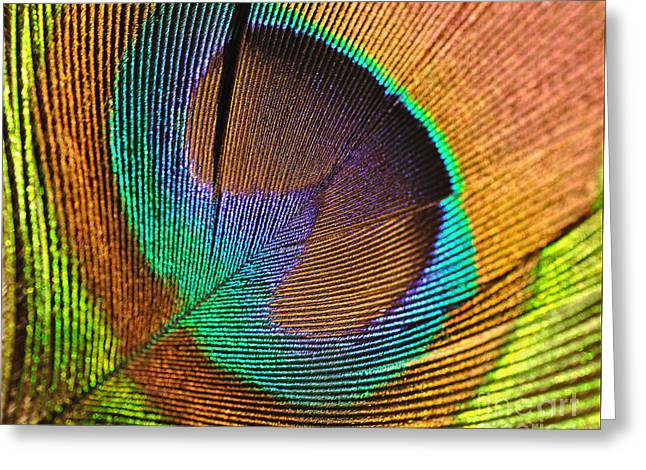 Tail Feather Greeting Cards - Eye of the Peacock Greeting Card by Kaye Menner