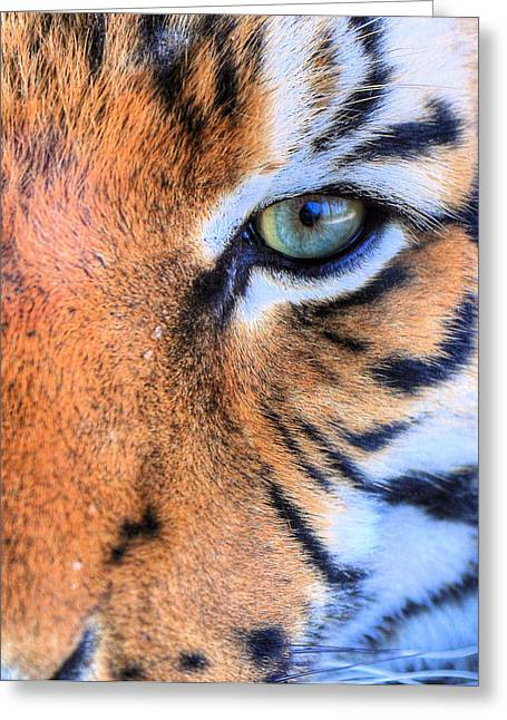University Of Alabama Greeting Cards - Eye of the Tiger Greeting Card by JC Findley