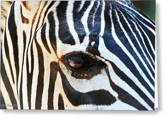 Eye Of The Zebra Greeting Card by Catherine Harms