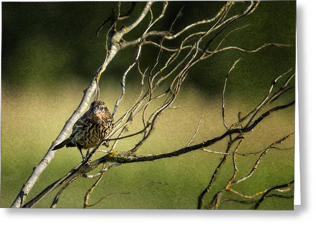 Eye On The Sparrow Greeting Card by Belinda Greb