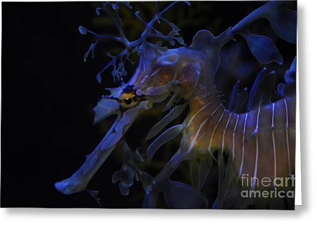 Leafy Sea Dragon Greeting Cards - Eye Sea You  Dragon  Greeting Card by Mandi Hill