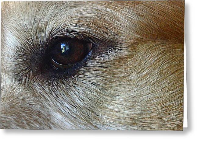 Eye See You Greeting Card by Lisa  Phillips