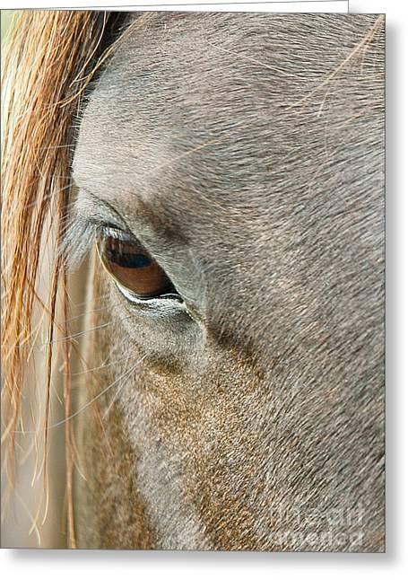Eyelash Greeting Cards - Eye See You Greeting Card by Nick  Boren