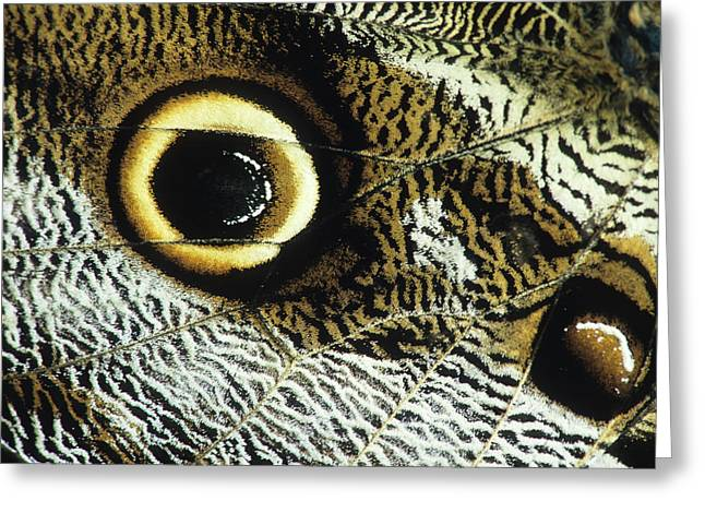 Eye Spot On The Outer Hind Wing Greeting Card by Thomas Wiewandt