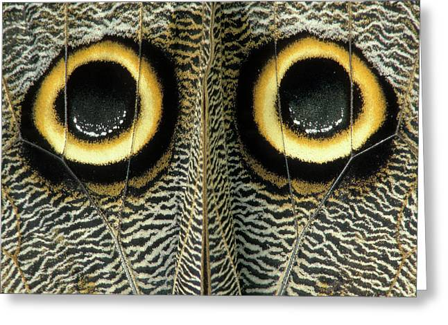 Eye Spots On The Outer Hind Wings Greeting Card by Thomas Wiewandt