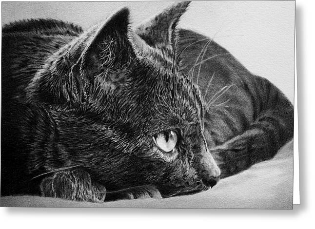 Drawings Of Cats Greeting Cards - Eye Spy Greeting Card by Kathryn Hansen