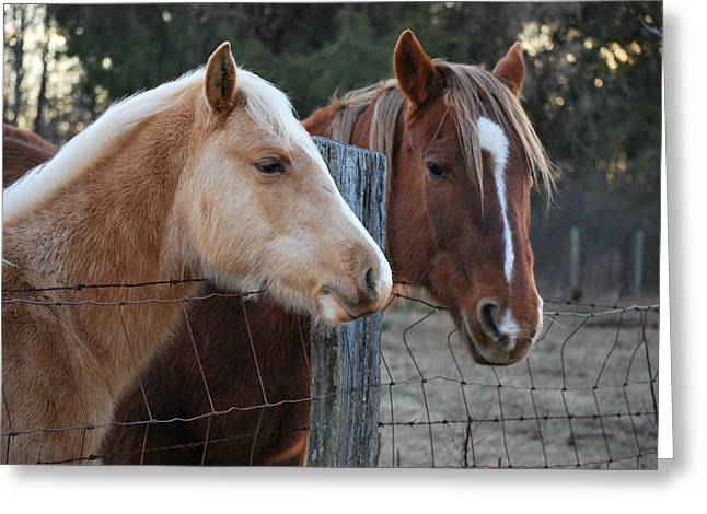 Equine Greeting Cards - Eye to Eye    - 09601868 Greeting Card by Paul Lyndon Phillips