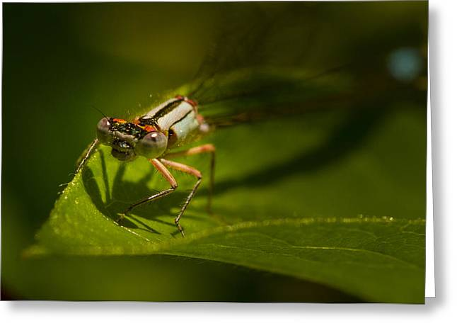 Insect Control Greeting Cards - Eye to Eye with the Damsel fly Greeting Card by Jean Noren