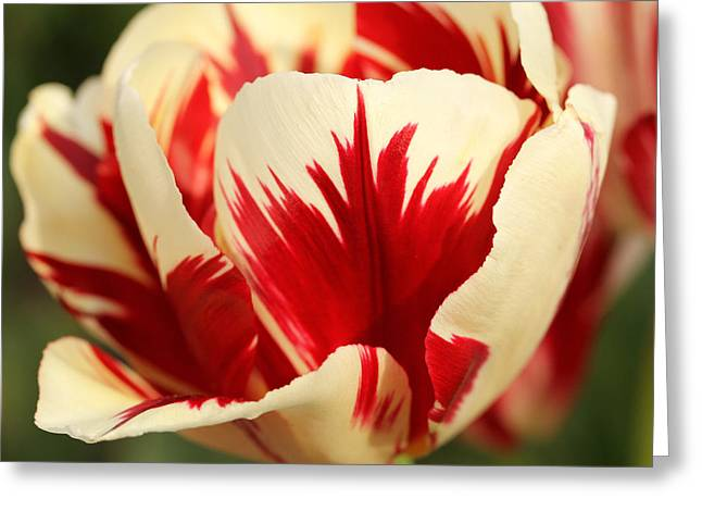 Garden Center Greeting Cards - EyeLighter Greeting Card by Connie Handscomb
