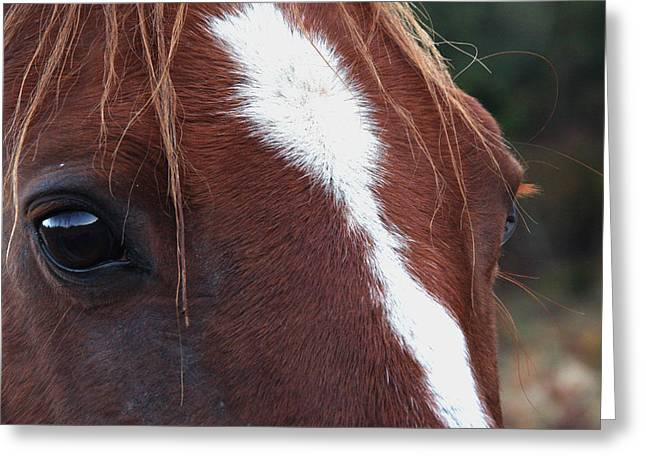 Eyes Are The Windows To The Soul Greeting Card by Peggy Collins