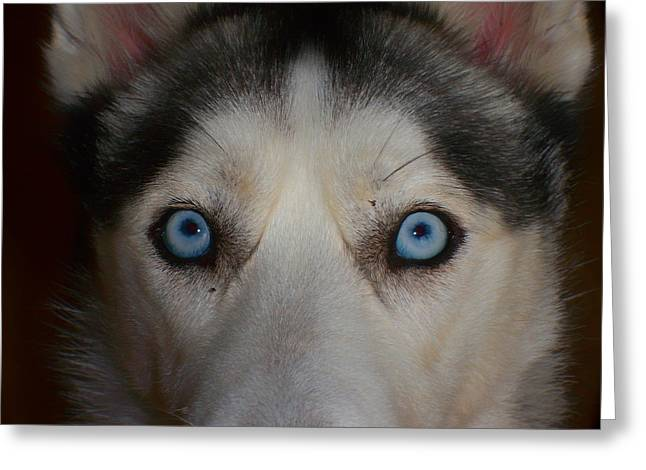 Husky Greeting Cards - Eyes of a Husky Greeting Card by Mountain Dreams