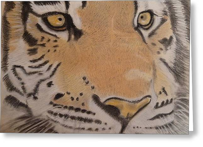 Wild Life Drawings Greeting Cards - Eyes Of A Tiger Greeting Card by Paul Blackmore
