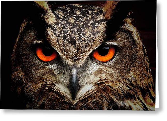 Lovely Owl Greeting Cards - Eyes of an Owl Greeting Card by Mountain Dreams