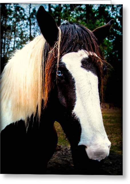 Horses With Nature Greeting Cards - EYES of BLUE Greeting Card by Karen Wiles