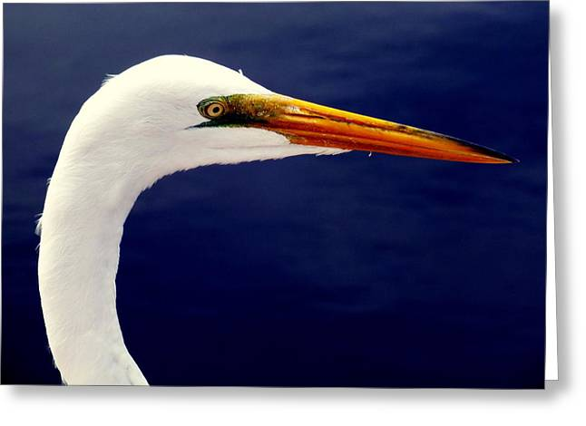 Sea Birds Greeting Cards - EYES of STEEL Greeting Card by Karen Wiles