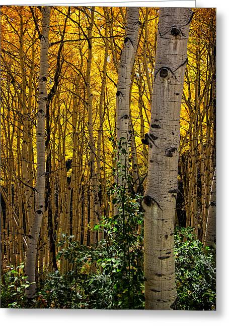 Most Photographs Greeting Cards - Eyes of the Forest Greeting Card by Ken Smith