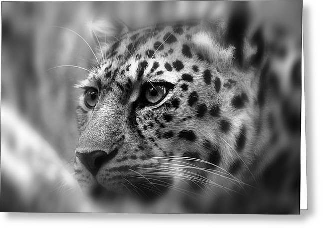 Leopard Hunting Greeting Cards - EYES of the LEOPARD Greeting Card by Daniel Hagerman