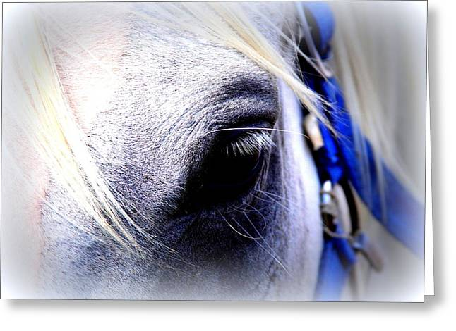 Travis Truelove Photography Greeting Cards - Eyes of Trust Greeting Card by Travis Truelove