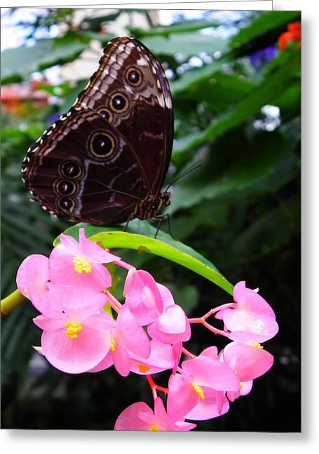 Eyes On Wings Greeting Card by Judy Wanamaker
