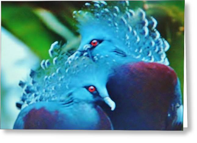 Bird Greetingcards Greeting Cards - FABULOUS BIRDS  14   Art Deco Greeting Card by Gunter  Hortz