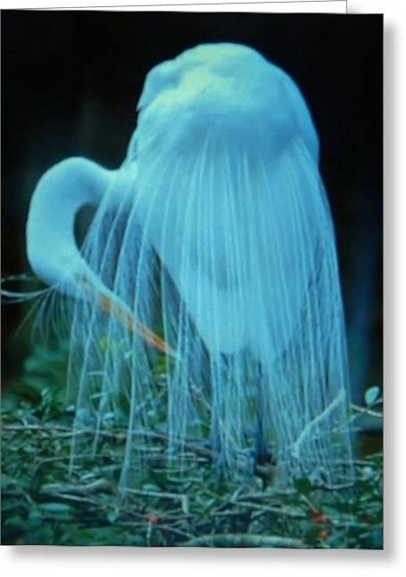 Natur Kunst Bilder Greeting Cards - Fabulous Birds  29 Greeting Card by Gunter  Hortz