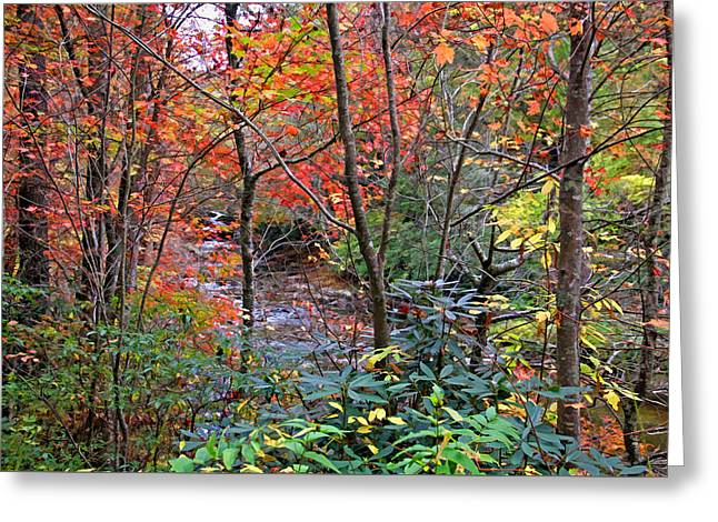 Blue Green Water Greeting Cards - Fabulous Fall Greeting Card by HH Photography