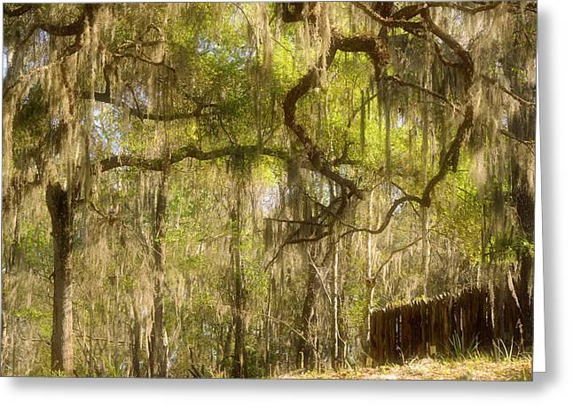 Moss Man Greeting Cards - Fabulous Spanish Moss Greeting Card by Christine Till