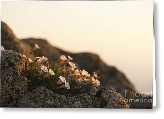 Close Focus Floral Greeting Cards - Face the Light Greeting Card by Anne Gilbert