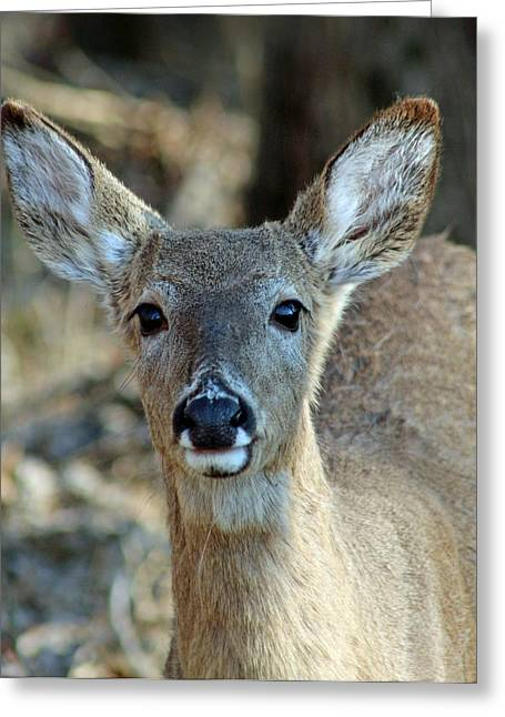 Faa Featured Greeting Cards - Face To Face Greeting Card by Lorna Rogers Photography