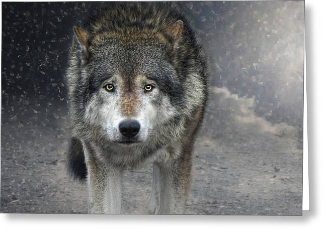 Face To Face With The Wolf Greeting Card by Joachim G Pinkawa