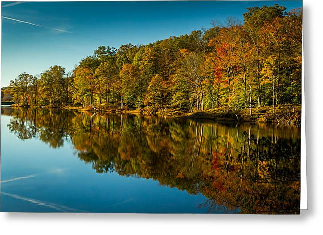 Indiana Autumn Greeting Cards - Faces in the Trees Greeting Card by Ron Pate