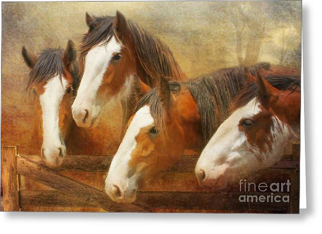 Clydesdale Greeting Cards - Faces Of Four Greeting Card by Trudi Simmonds