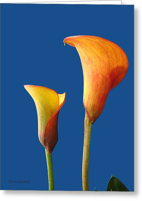 Calla Lily Greeting Cards - Facing The Day Greeting Card by Donna Blackhall