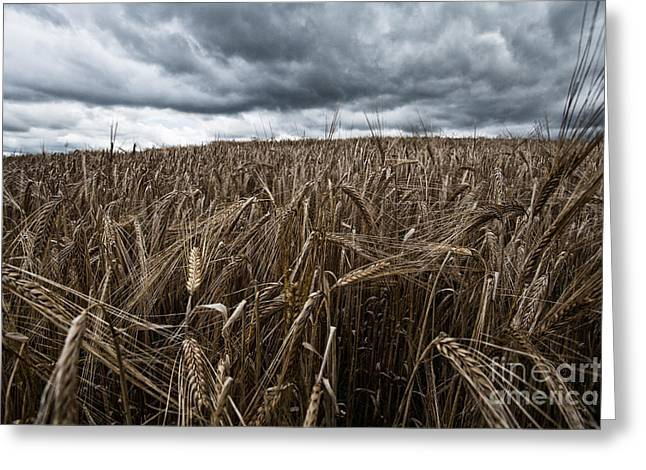 Farmers Field Greeting Cards - Facing the Storm color Greeting Card by John Farnan
