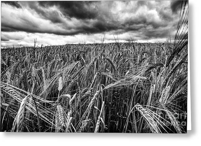 Farmers Field Greeting Cards - Facing The Storm Greeting Card by John Farnan