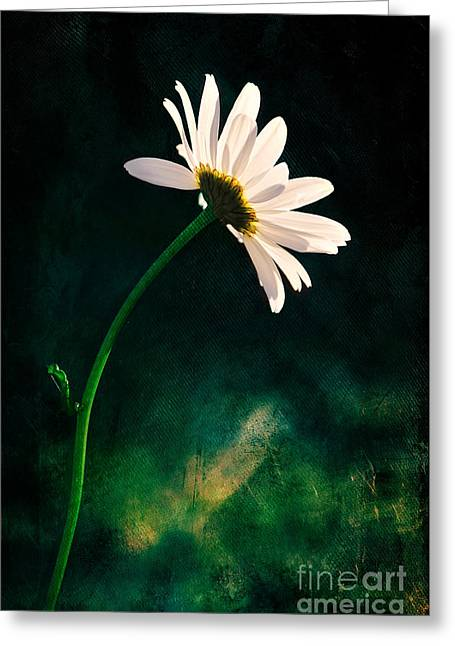 Photographic Art For Sale Greeting Cards - Facing the Sun Greeting Card by Randi Grace Nilsberg