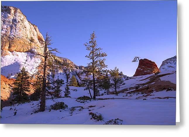 Pine Tree Photographs Greeting Cards - Fade Greeting Card by Chad Dutson