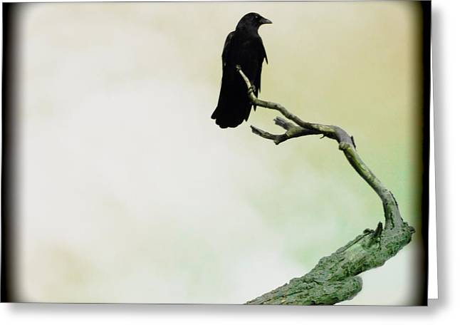 Crows In Trees Greeting Cards - Fade Into Greeting Card by Gothicolors Donna Snyder