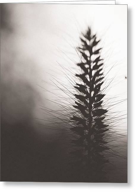 Grass Greeting Cards - Fade Into You Greeting Card by Shane Holsclaw