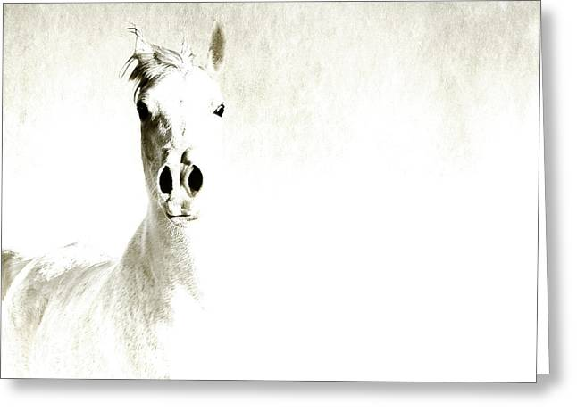 Fade To White Greeting Card by Karen Slagle
