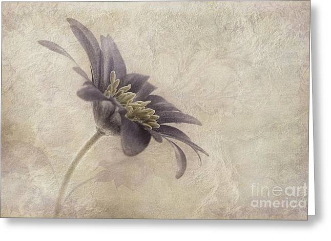 Saturated Greeting Cards - Faded beauty Greeting Card by John Edwards
