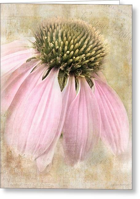 Faded Coneflower Greeting Card by Melissa Bittinger