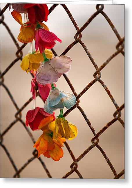 Lei Greeting Cards - Faded Dreams Greeting Card by Peter Tellone