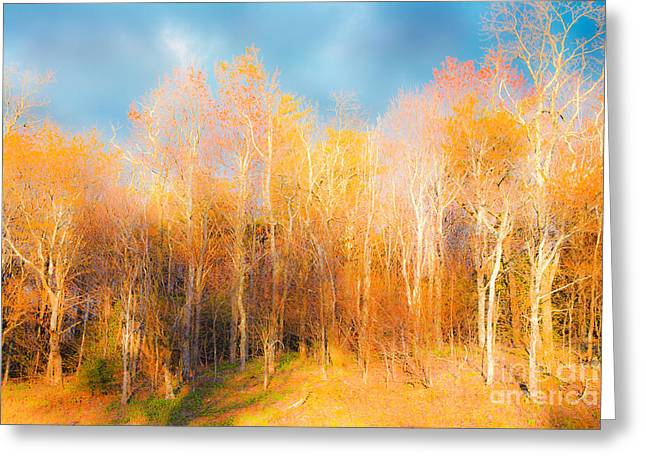 Paint Photograph Greeting Cards - Faded Forest - Blue Ridge Mountains Greeting Card by Dan Carmichael