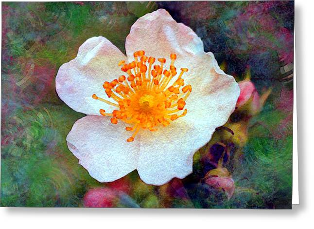 Texture Floral Greeting Cards - Faded Memories series - Into the Evening Greeting Card by Moon Stumpp