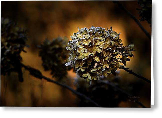 Changing Of The Seasons Greeting Cards - Fading Away Greeting Card by Julie Palencia