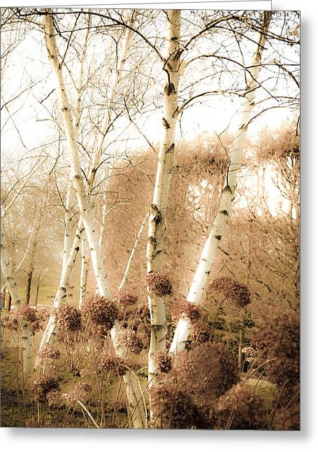 Birch Tree Digital Greeting Cards - Fading Fall Greeting Card by Julie Palencia