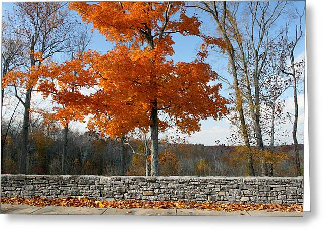 Recently Sold -  - Natchez Trace Parkway Greeting Cards - Fading Glory Greeting Card by Philip Hartnett