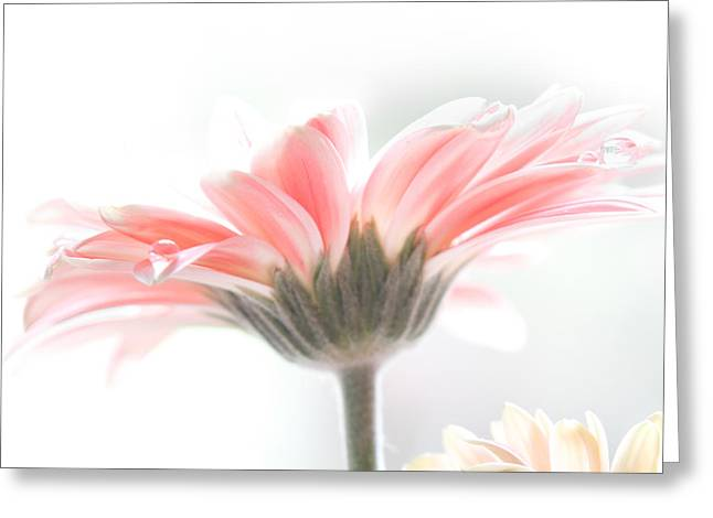 Droplet Greeting Cards - Fading into light Greeting Card by Constance Fein Harding