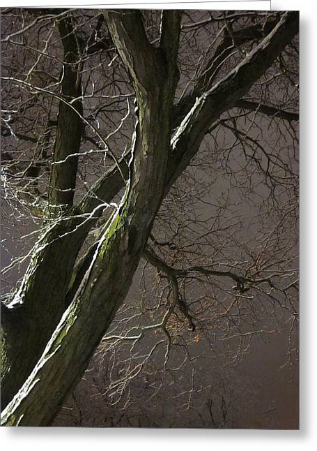 Guy Ricketts Photography And Art Greeting Cards - Fading Into the Winters Night Greeting Card by Guy Ricketts
